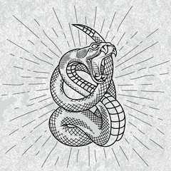 Viper snake in star rays with grunge background. Hand drawn illustration in outline. Occult symbol.