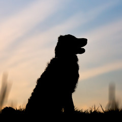 Dog sitting in silhouette