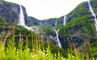 spring flowers in norwegian mountains