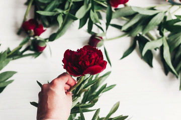 hand holding beautiful red peony on wooden rustic background. modern boho floral image. top view. happy womens day or mothers. wedding florist