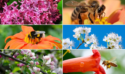 Spring collection with flowers, insects, fruit trees.