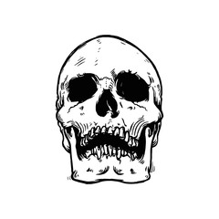 Vector illustration of monochrome hand drawn human skull