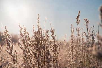 Winter field in sunlight