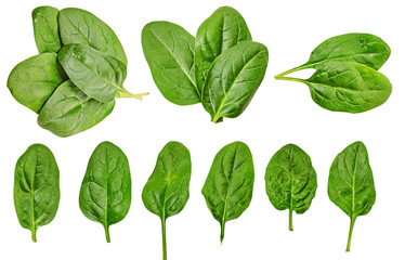 Healthy diet. spinach. greenery. For cooking food. Diet. For your design. isolated.