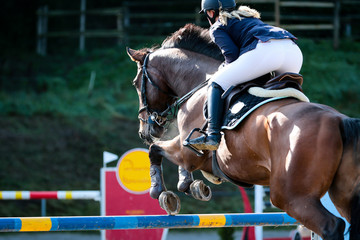 horse in jumping tournament, over or between jumps..