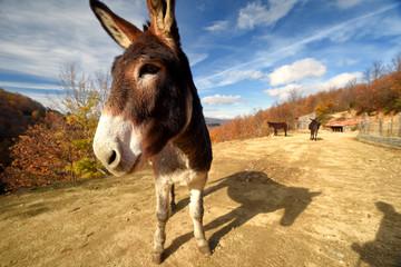 donkey closeup