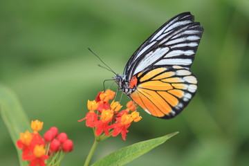 macro photography of Monarch butterfly with milkweed plant