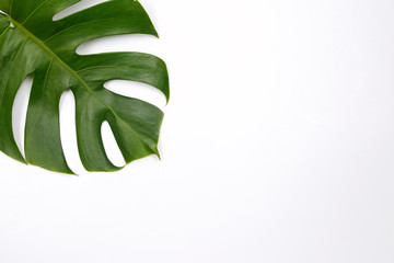 Tropical palm leaf on white background. Flat lay, top view Wall mural