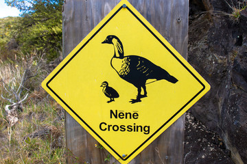 Warning sign protecting an endangered species, the Nene, in Haleakala National Park on the island of Maui in Hawaii