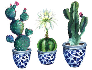 watercolor cactus isolated