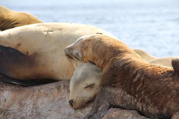 Adorable sea lions in Monterey Bay, California