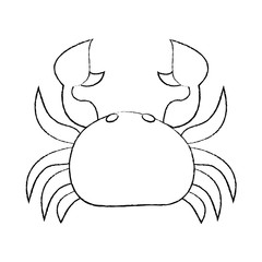 sea wild life crab marine animal image vector illustration sketch design
