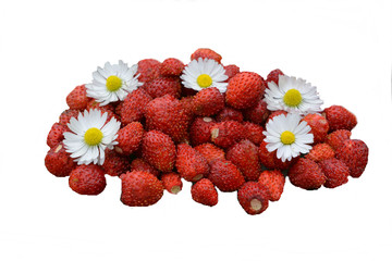 Red berries strawberries and flowers of daisies.Beautiful composition isolated on white background