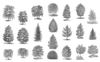 A collection of trees on a white background.