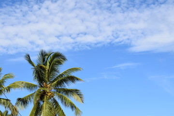 palm and sky