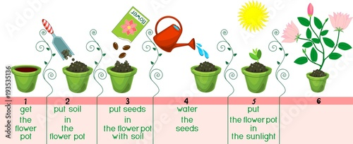 how to plant a seed instructions ks1