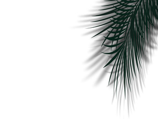 palm tree leaf with shadow reflect on clean white wall with copy space. abstract simple palm tree leaf in black and white color for tropical background concept