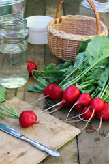 Fresh radish with tops on a wooden table.