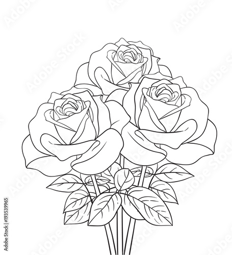 Flower Bouquet Line Drawing : Quot roses bouquet line drawing stock image and royalty free