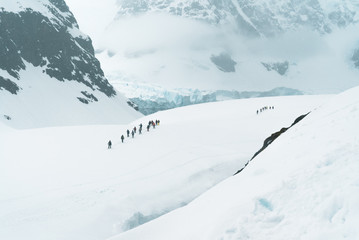 Mountaineering Group exploring the Landscape - Antarctica