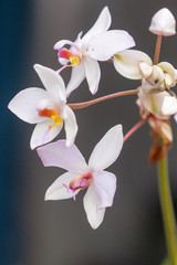 Orchid, Bangalore, Karnataka. Orchids for sale