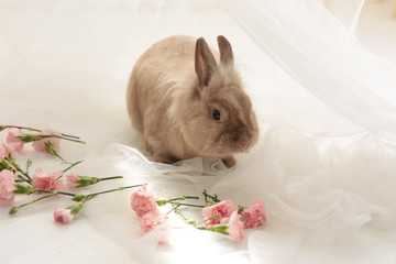 Beige Easter bunny rabbit with white flowers