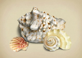 Watercolor illustration of shells