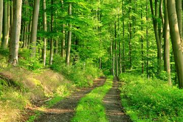 Waldweg durch sonnigen grünen Wald im Sommer