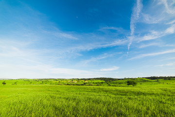 Blue sky over a green field in the springtime