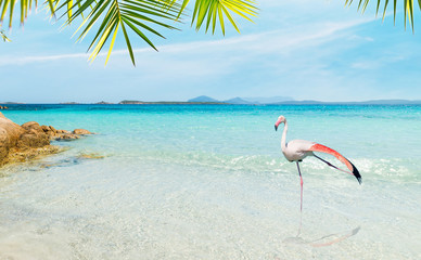 Flamingo in a tropical beach