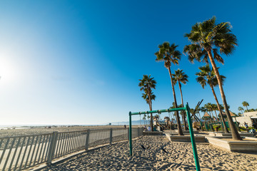 Palm trees by the sea in Venice beach
