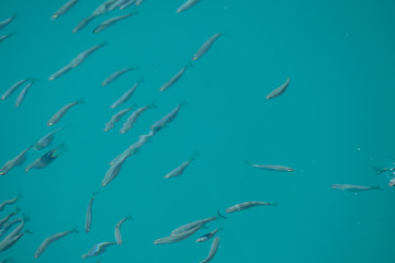 Photo Picture Image of many fishes pisces, fishes bacground