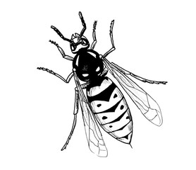 Vasp insect hand draw illustration