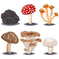 Edible and poisonous mushrooms. Champignon, shiitake, honey agarics, oyster, truffle and amanita muscaria. Cartoon vector set isolated on white background.