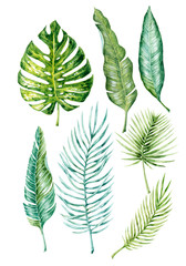 Watercolor hand-drawn exotic (tropical) leaves on the white background