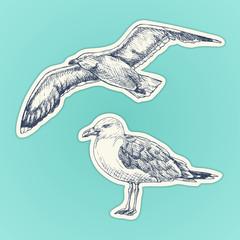 Hand drawn seagull. Marine bird. Vector illustration. Stickers set