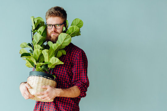 Young bearded hipster sman, dressed in red plaid shirt and dark blue jeans, standing, holding flower pot with green plant house and looks at the camera. In background gray wall. Changing jobs, moving.