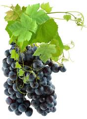 Wall Mural - grappe de raisin noir et vigne