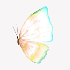 Illustration of a watercolor butterfly.