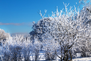 Snow covered frosted trees and bushes on sunny day. Winter landscape.
