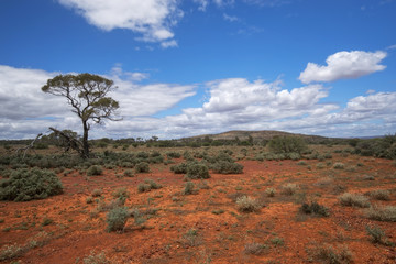 South Australia – outback desert with scrubs and a tree under cloudy sky as panorama