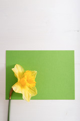 Narcissus on wooden table with empty card, bright day