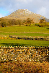 lake district national park, stone walls in patterns up a green grass hill, trees and then a snow covered mountain top