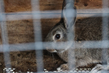 Rabbit close-up in a cage at animal farm