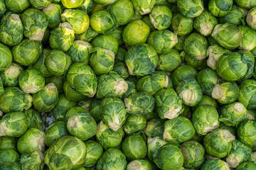 Brussels Sprouts Pattern
