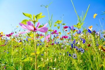 Wall Mural - Grußkarte - bunte Blumenwiese - Sommerblumen