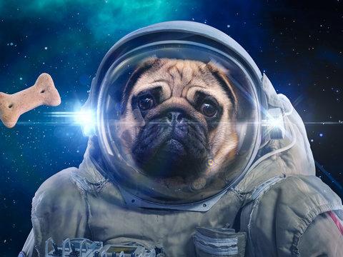 Dog in space suit hunts dog food, hunt