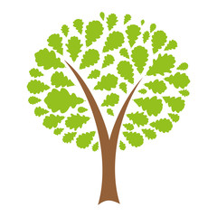 Oak with green leaves. Vector illustration.