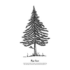 Pine tree outline hand drawn silhouette symbol logo