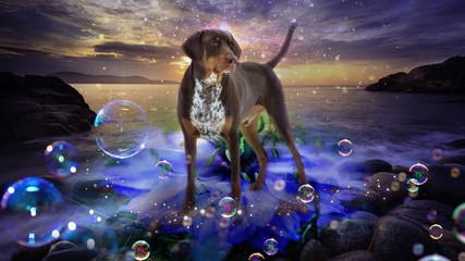 Hund steht am Steinstrand  mit Seifenblasen im Vordergrund, Fantasie